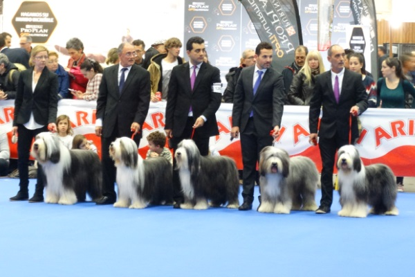 IRBOAS  Bearded Collie